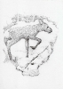 Рисунки Ирины Филус